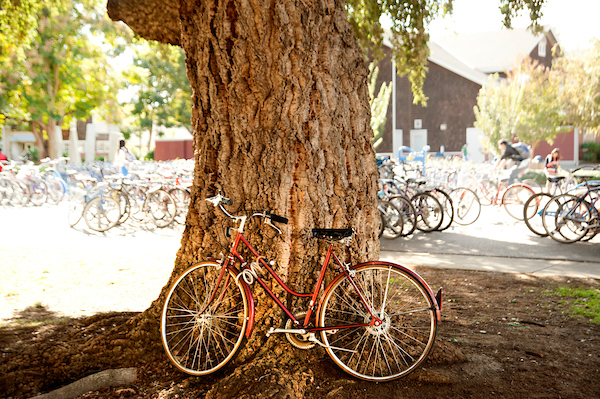 Bike leaning against a tree with bike racks in the background