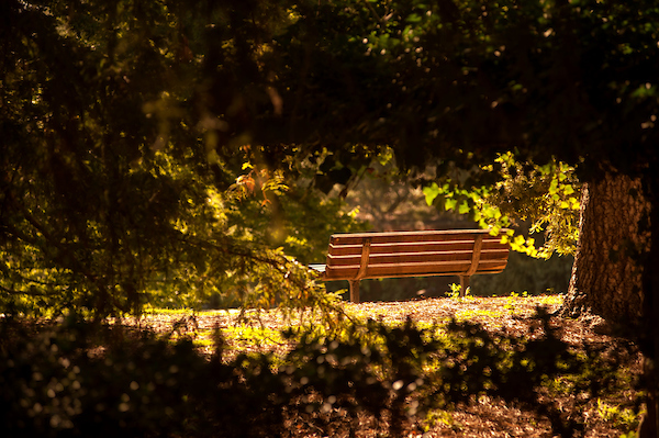 A bench on campus in the UCD Arboretum
